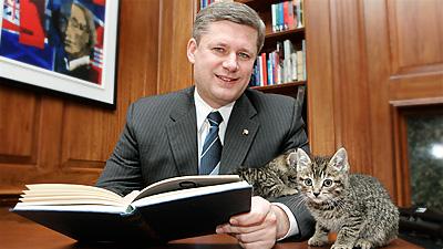 PM-splashgraphic-Kittens